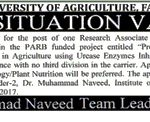 University Of Agriculture Faisalabad Job 2017